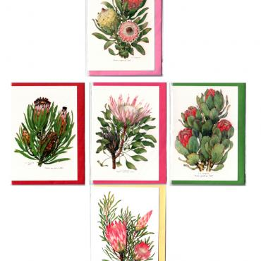 Professor Stanley Seagriefs Protea Watercolors reproduced on Greeting Cards with mixed coloured envelopes