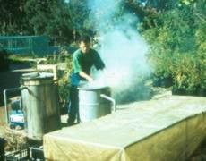 Smoking protea seeds using a fire and a polythene tent